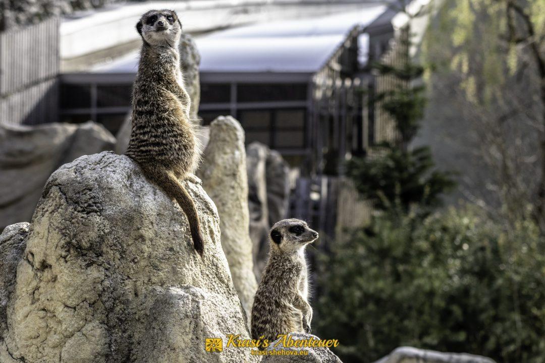 Tierpark Hellabrunn / Зоопарк Хелабрун