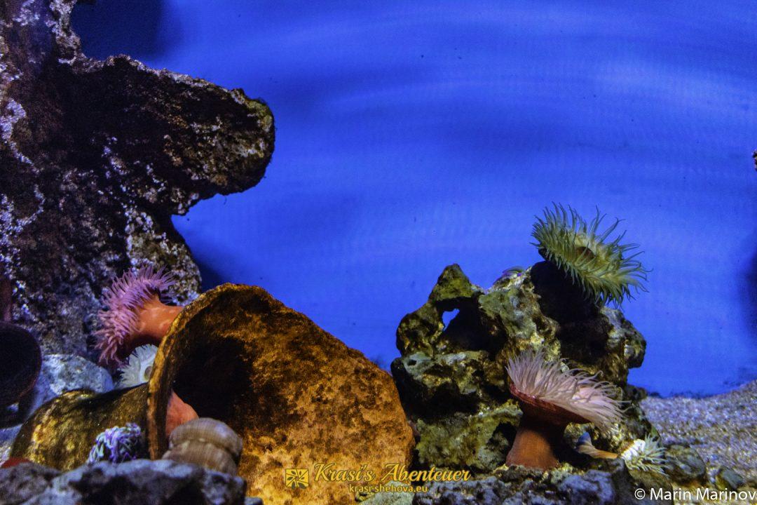 National Aquarium / Националният аквариум