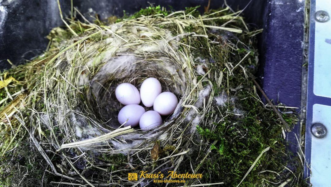 Das Nest / Гнездото