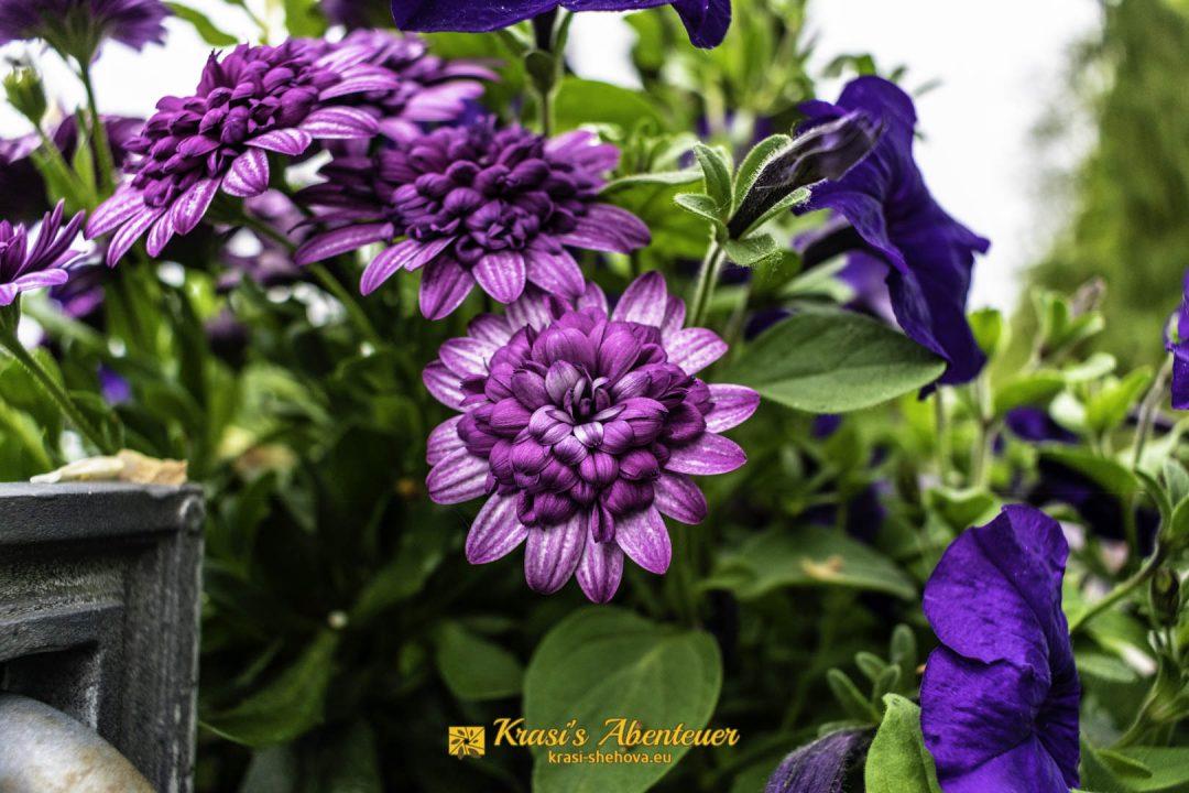 Цветя красиви