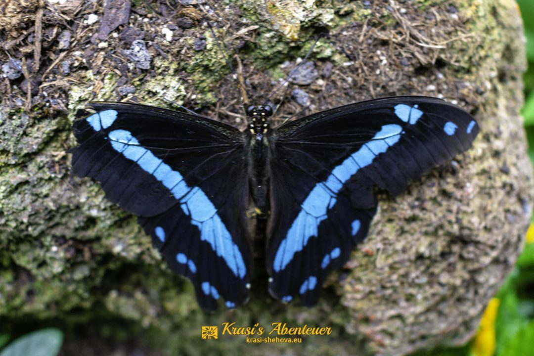 Красива пеперуда